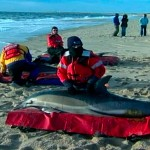 Extraña muerte de delfines en Massachusets, Hno. Danilo