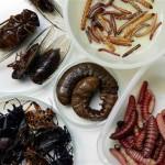 ALERTA ANTE LA HAMBRUNA MUNDIAL: ONU llama comer insectos para combatir hambre, Hno. Luis N