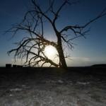 Históricas restricciones al consumo de agua en California por sequía