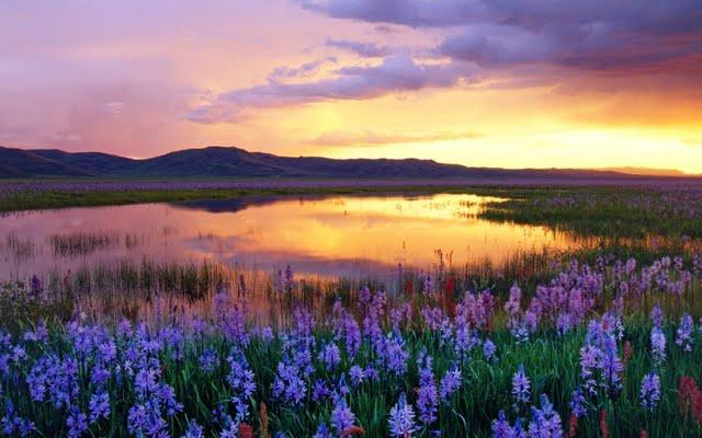 beautiful-landscape-93345