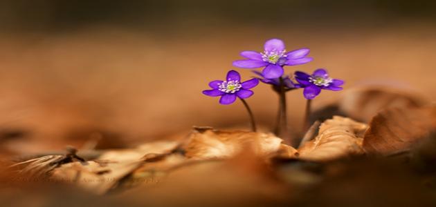 macro-flower-bright-Favim.com-482200