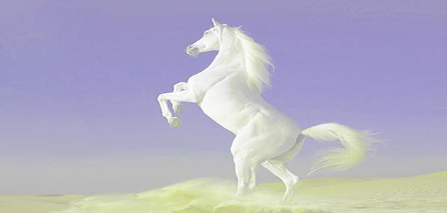 caballo blanco 10