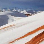 """Hola polar en el desierto del Sahara""Aporte Hna. María Elena"