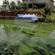 Decretan estado de emergencia en Florida por alga tóxica en lago Okeechobee