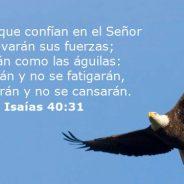 Isaías 40