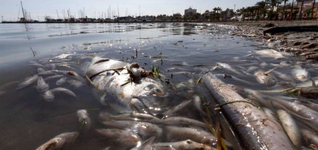 Retiradas tres toneladas de peces muertos en el Mar Menor: Aporte Hna.María ELena