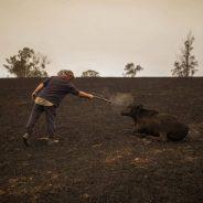 Los incendios no ceden en Australia, Aporte Hna. María Elena